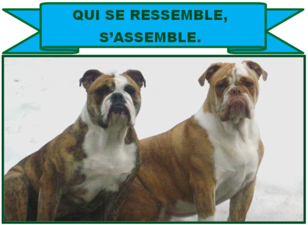 RESSEMBLE II